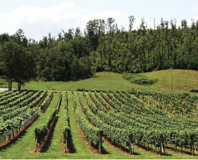 Notelly River Valley Vineyards
