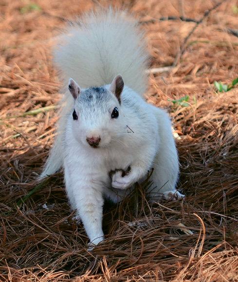5. White Squirrels